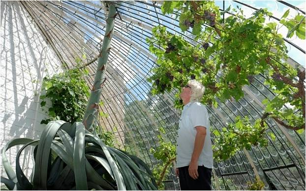 Planta gigante de agave todavía en aumento